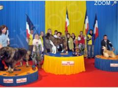 foto di Exposition Canine Internationale