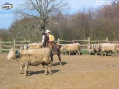 picture of 1er concours auvergne team penning
